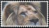 lion stamp by goredoq