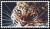 jaguar stamp by goredoq