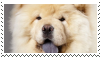 chow chow dog stamp by goredoq