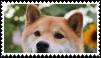 shiba inu dog stamp by goredoq