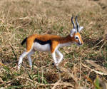 Poseable Needle Felted Gazelle