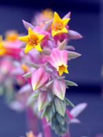 Flowers by Harley-Al