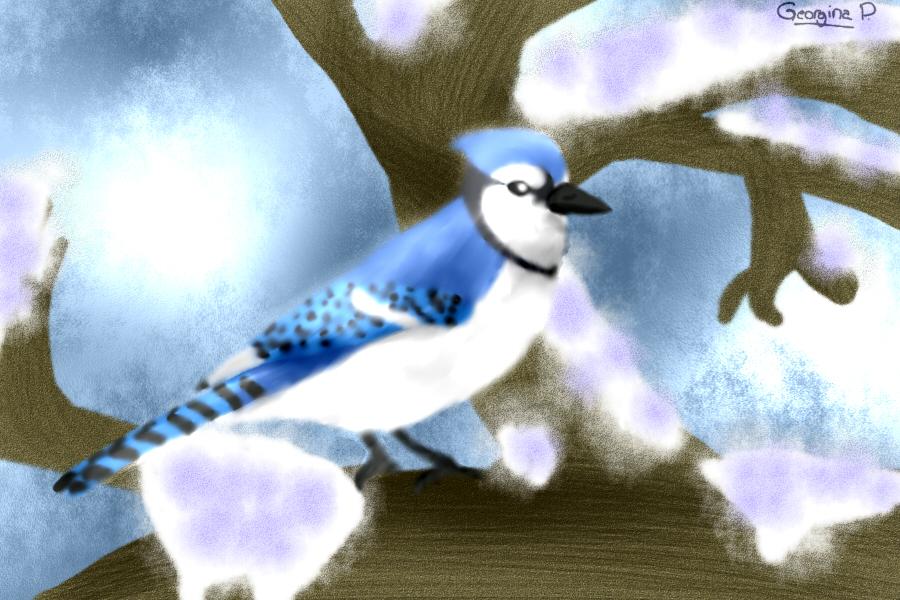 Arrendajo Azul by ScourgeTiny