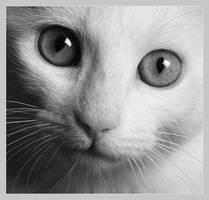 Cat by Neoloken