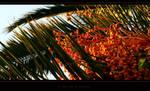 a palm tree in marmaris