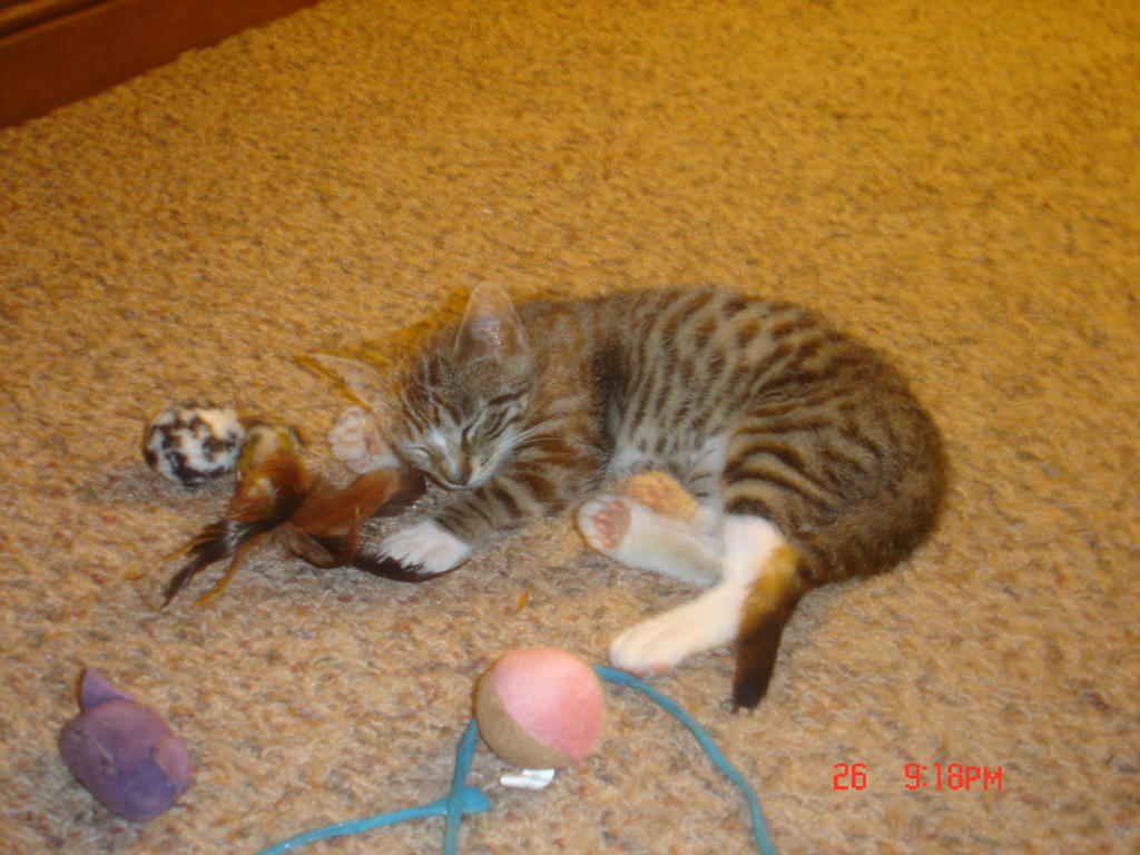 is declawing a cat painful