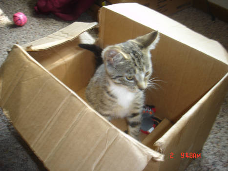 Boots in a box