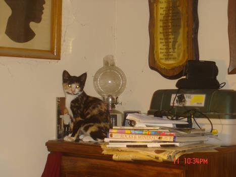 Katie on a dresser.