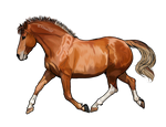 BLM Mustang