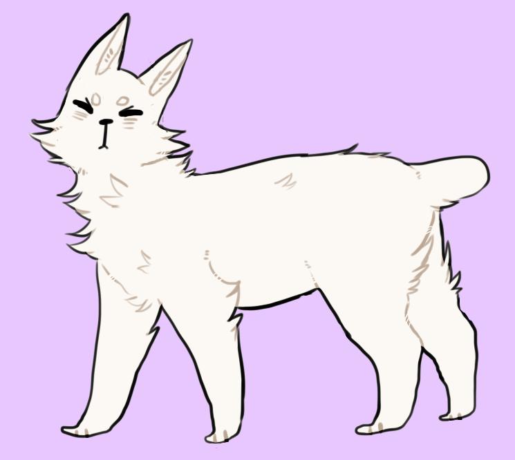 cat swollen stomach
