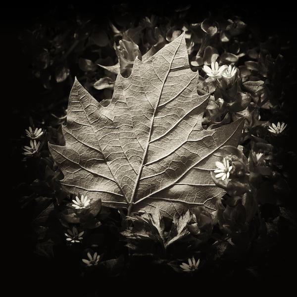 Amaranthine Autumn by EveningofLight