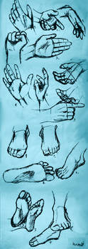 Hands and feet study by MadRacer