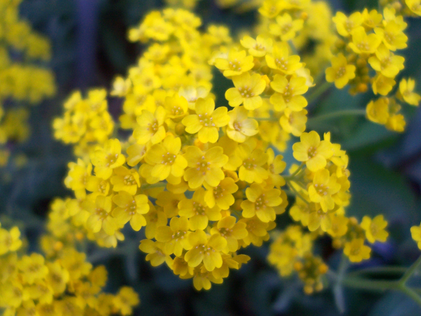 Little yellow flowers by therealzubes on deviantart little yellow flowers by therealzubes mightylinksfo Image collections