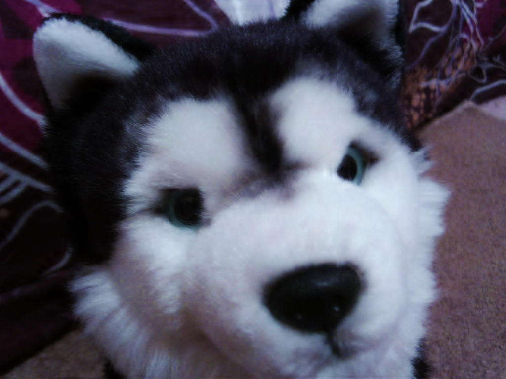 webkinz husky dating [webkinz newz] siberian husky name me contest general welcome to webkinztown general rules wt current events show off your webkinz home.