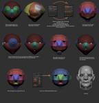 Zsphere Base Head Workflow