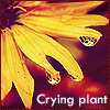 Crying plant. by cassie93