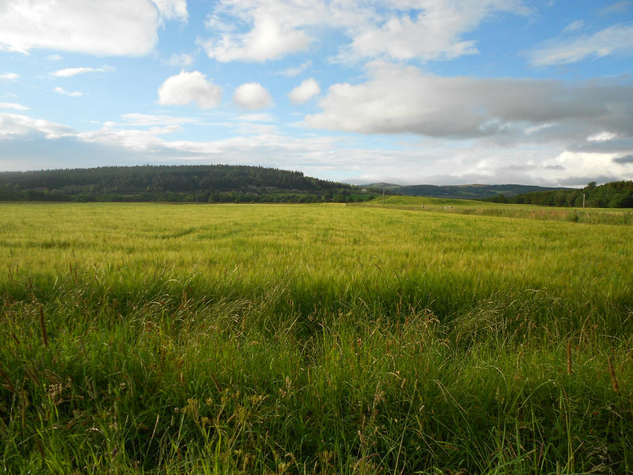 Green Field by Billiam268