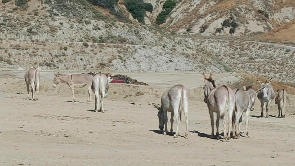Southern California Donkeys by UncleBob11