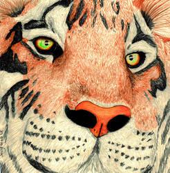 tiger eyes by iknomyabcdsn123s