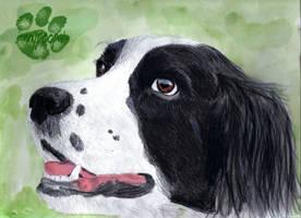 a doggy by iknomyabcdsn123s