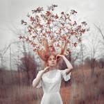 tree's dreams