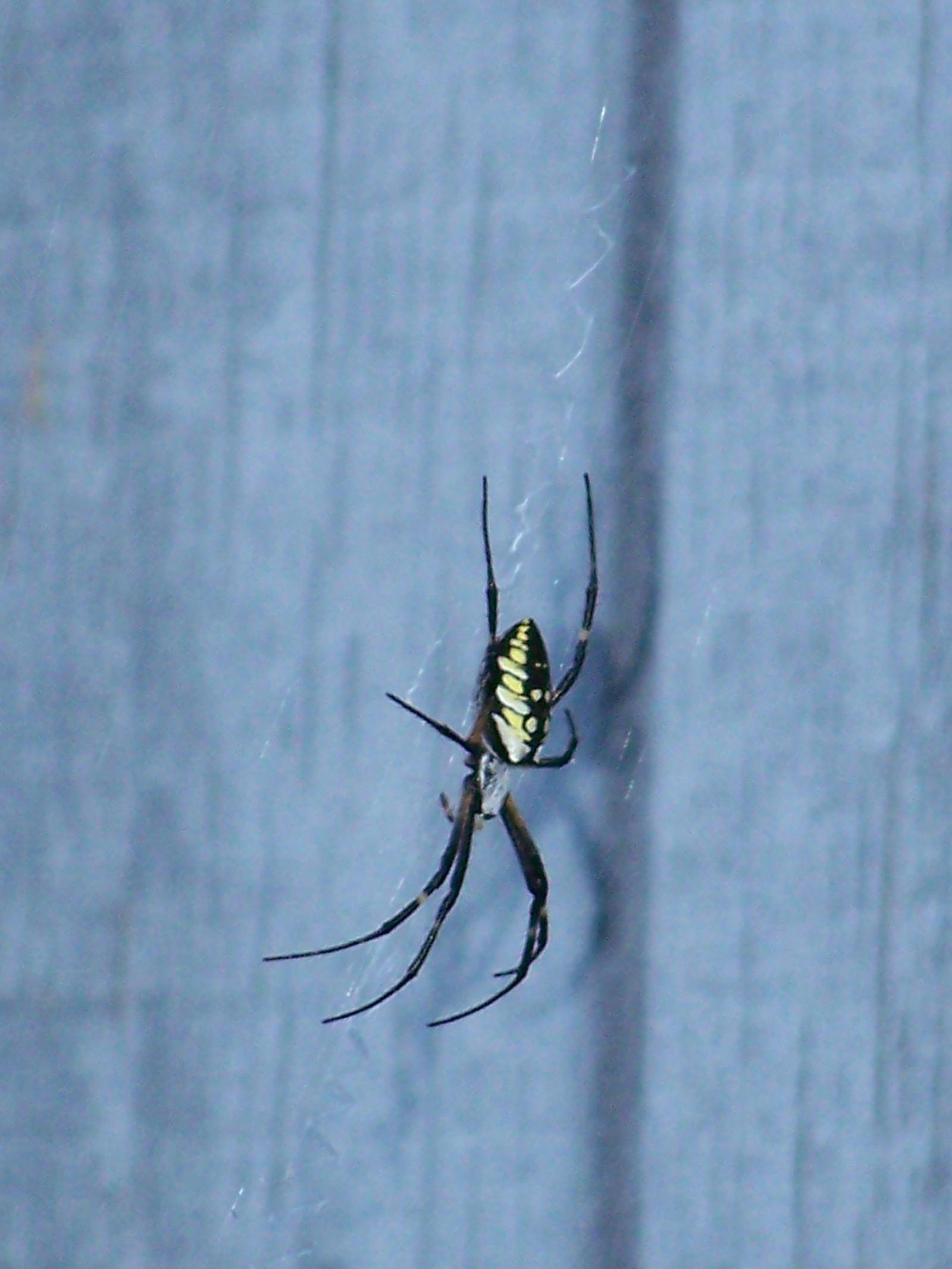 Icky Spider 2 by seiyastock