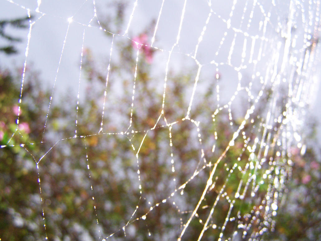 Spider Web by seiyastock