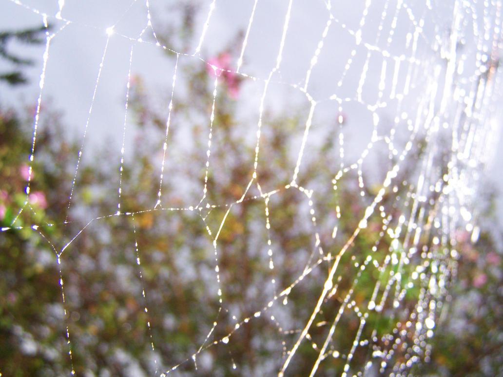 Spider Web by seiyastock