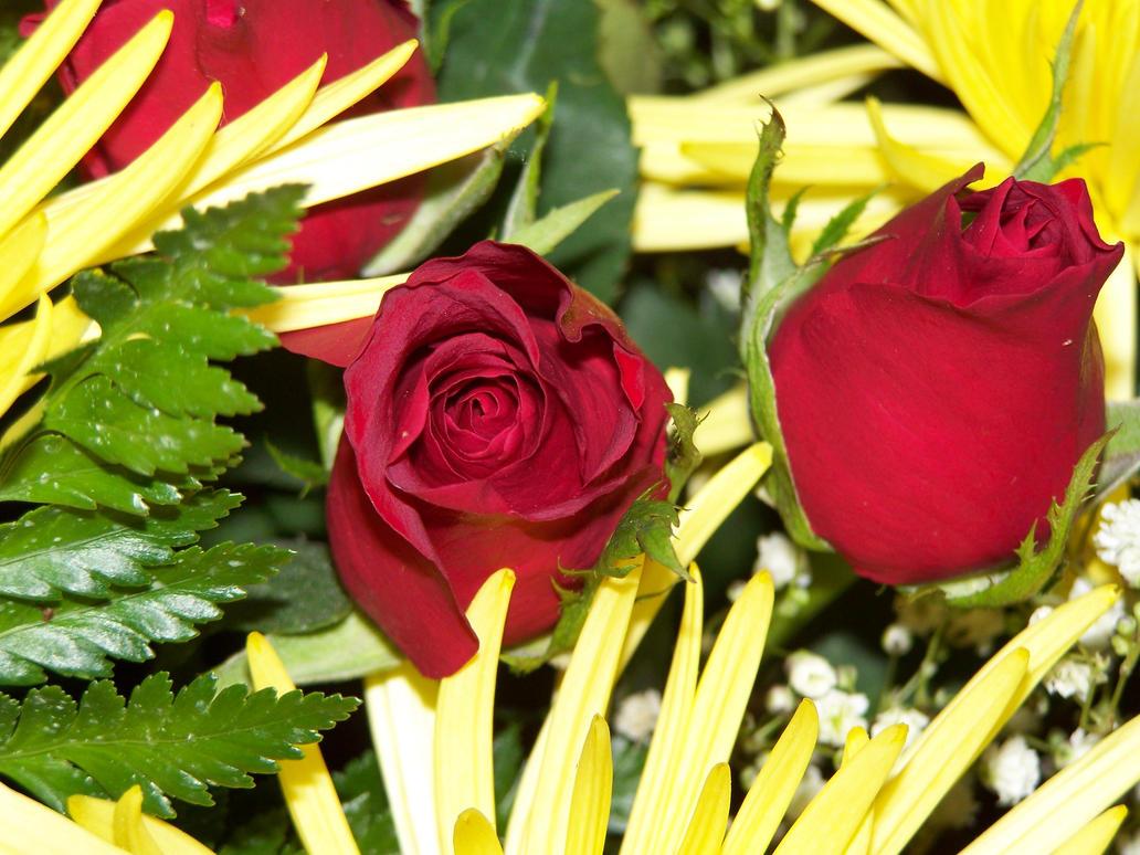 Valentine Flowers by seiyastock