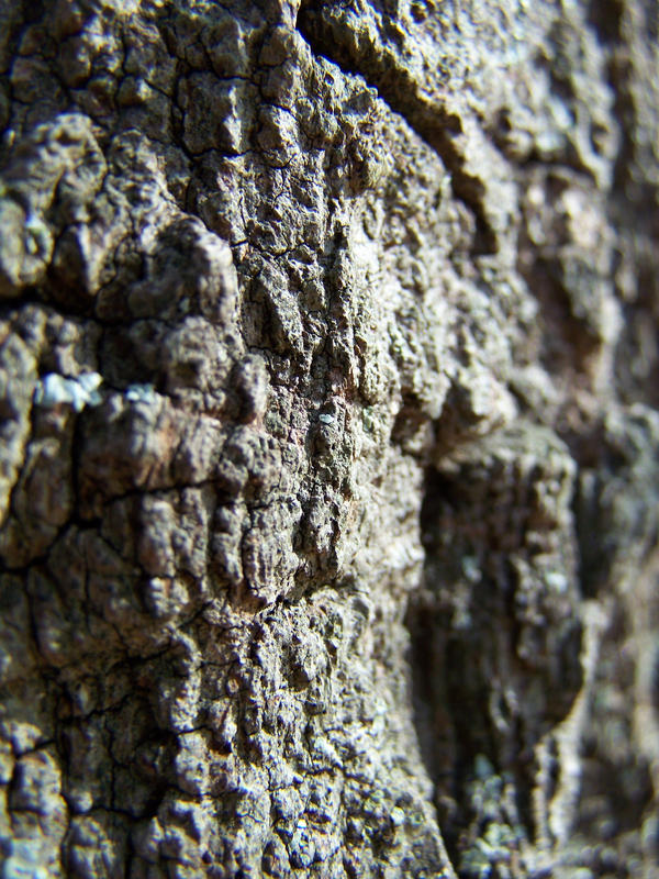 tree texture by seiyastock
