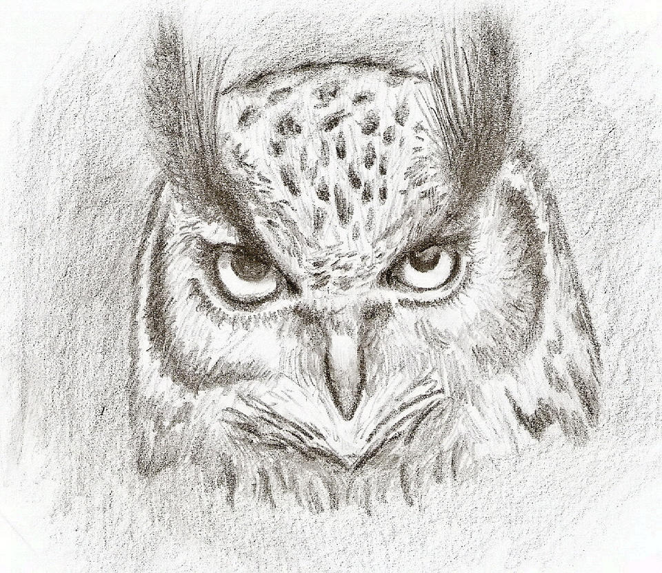 Simple Owl Sketches
