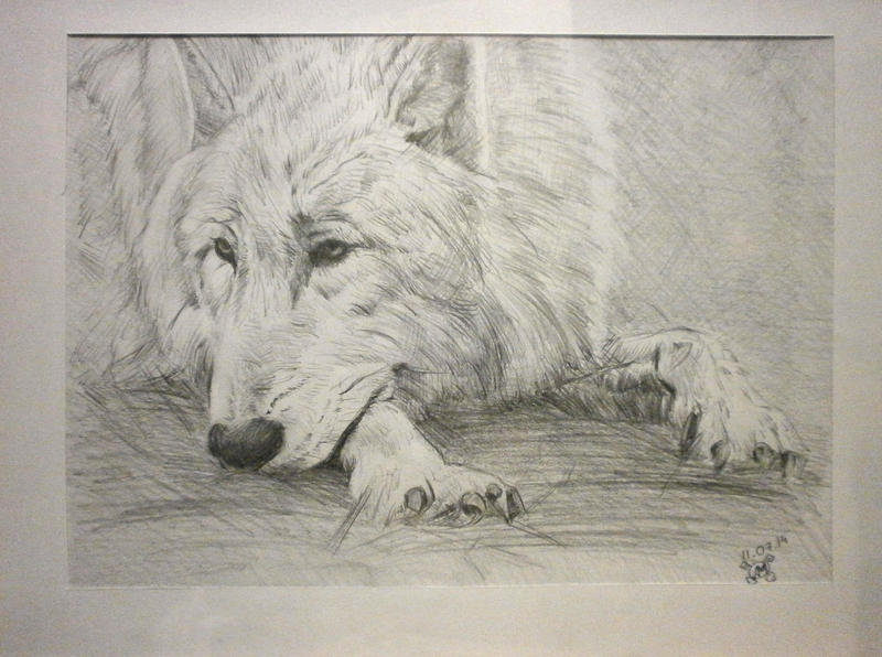 wolf by FukindGUD