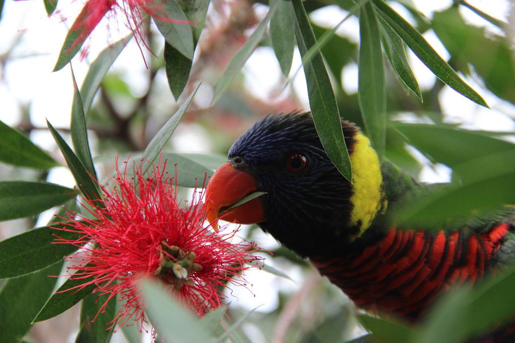 Nectar feeder by DinosaurianDude