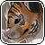 Free Tiger Icon by BlueGriffyon