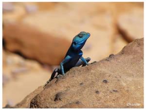 blue lizzard