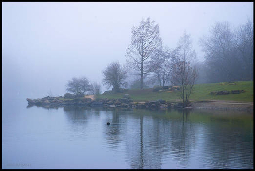 Today morning, fog in the Park.