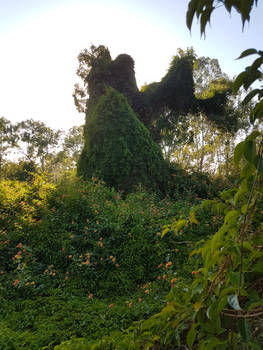 Vine-covered Statue or Vine-covered Tree?