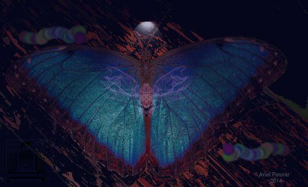 Ariel Pascar Zazen Butterfly by apascar