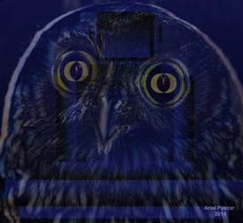 Ariel Pascar Owl in Zazen by apascar
