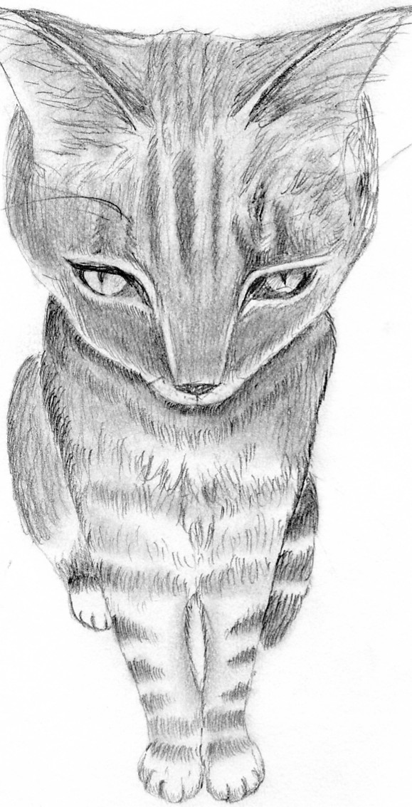 Kitten by LoveoftheDark