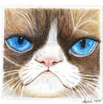 Grumpy Cat  R.I.P by Supach
