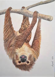 Sloth by Supach