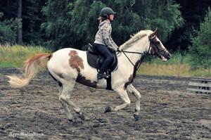 HORSE STOCK - Pinto 01