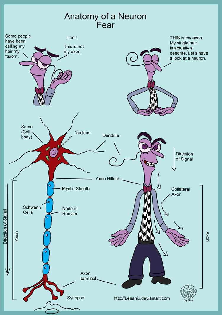 Anatomy of a Neuron by Leeanix on DeviantArt