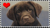 heart chocolate labs stamp by Neji-x-Hyuuga