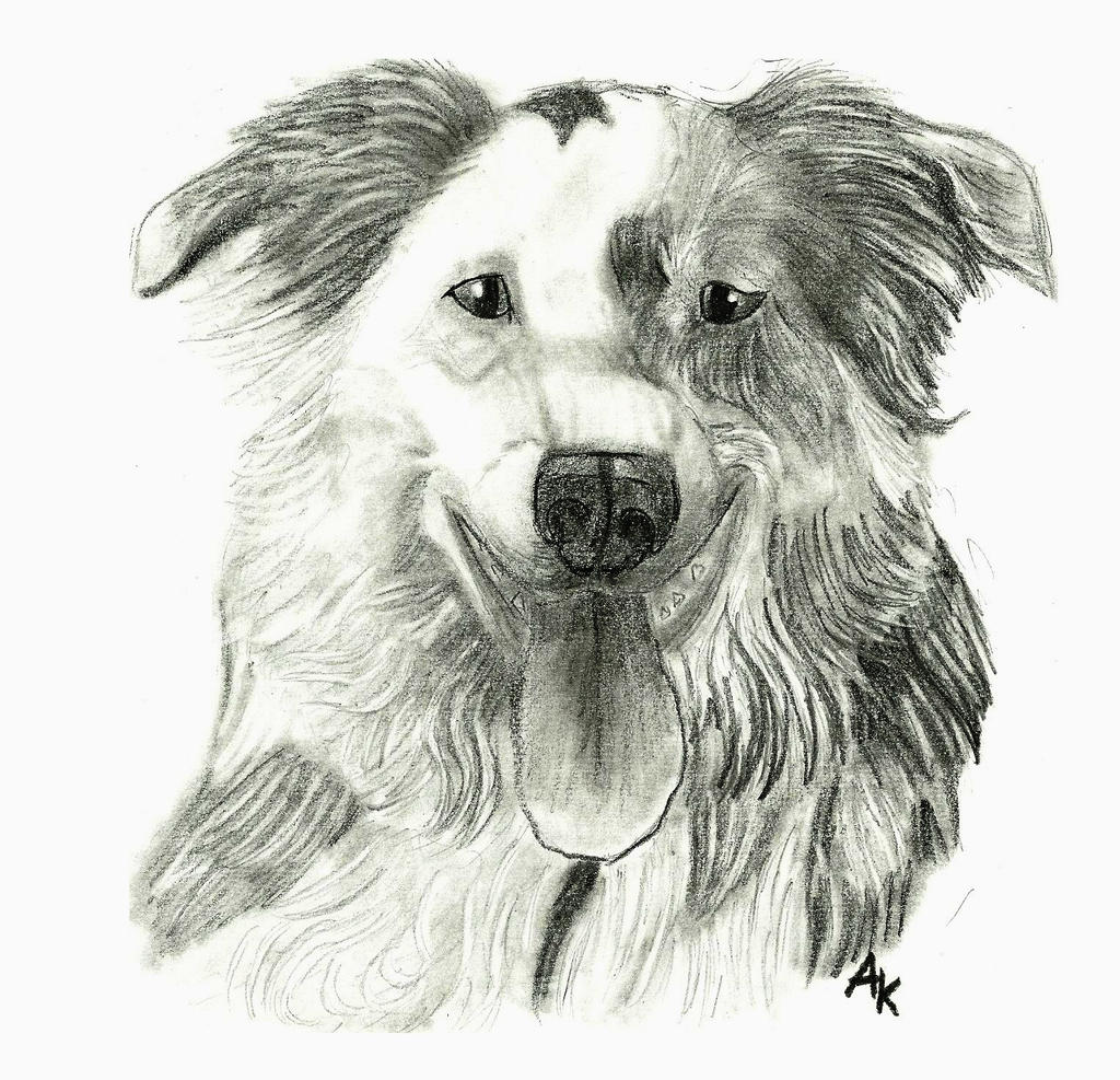 taipi drawing by bluespiritwolf6 on deviantart