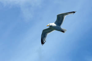 Seagull 02 Stock by lokinststock