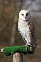 Owl 01 Stock
