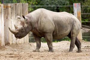 Rhinoceros 01 Stock by lokinststock