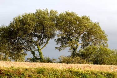 Trees 01 Stock by lokinststock